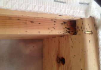 Remove Bed Bugs From Wood Furniture